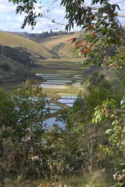 Die Reisfelder von Iavomanitra